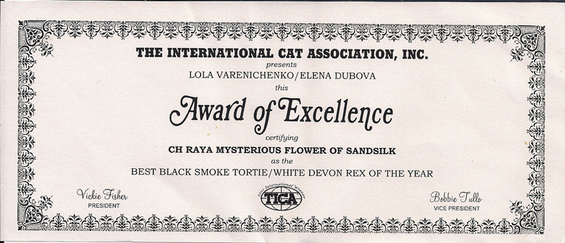 Raya's Mysterious Flower of sand Silk .Best Black Smoke Tortie with White Devon Rex Of The Year
